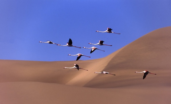 SF-NAMIBIA-HIGHLIGHTS Namibia Flaminges dunes sandwich harbour 174257795