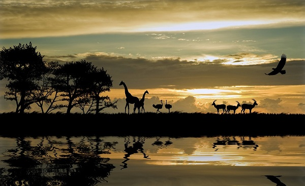 SF-SA-ROMANTISCH Afrika Silhouette of animals 70722328